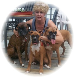 Me and my precious Boxers Zeus, Max and Alli